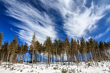 trees on snowy ground under white clouds