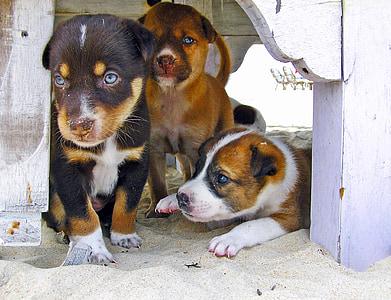 three puppies under white table