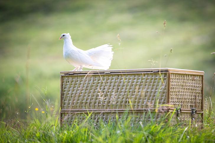 dove perch on wicker box in grass field