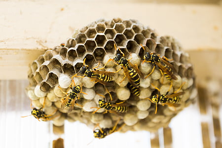 close up photography of bees and bee hive