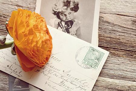 orange petaled flower on postage
