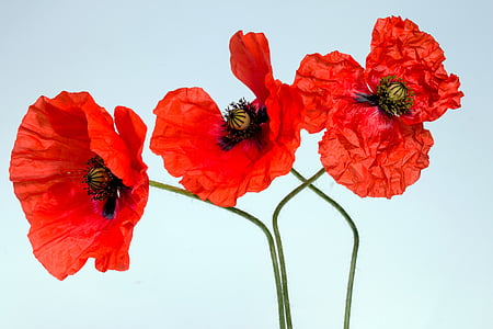 three red petaled flowers
