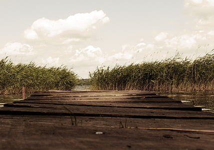 brown wooden dock surrounded by grass field