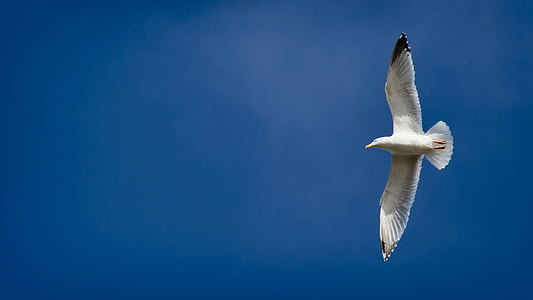low angle photography of seagull flying under blue sky during daytime