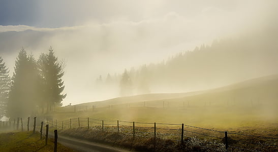 photography of field of fog