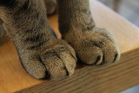 paws, cat, claw, paw, claws, feline