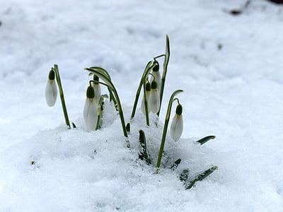 white petaled flowers on snow pavement