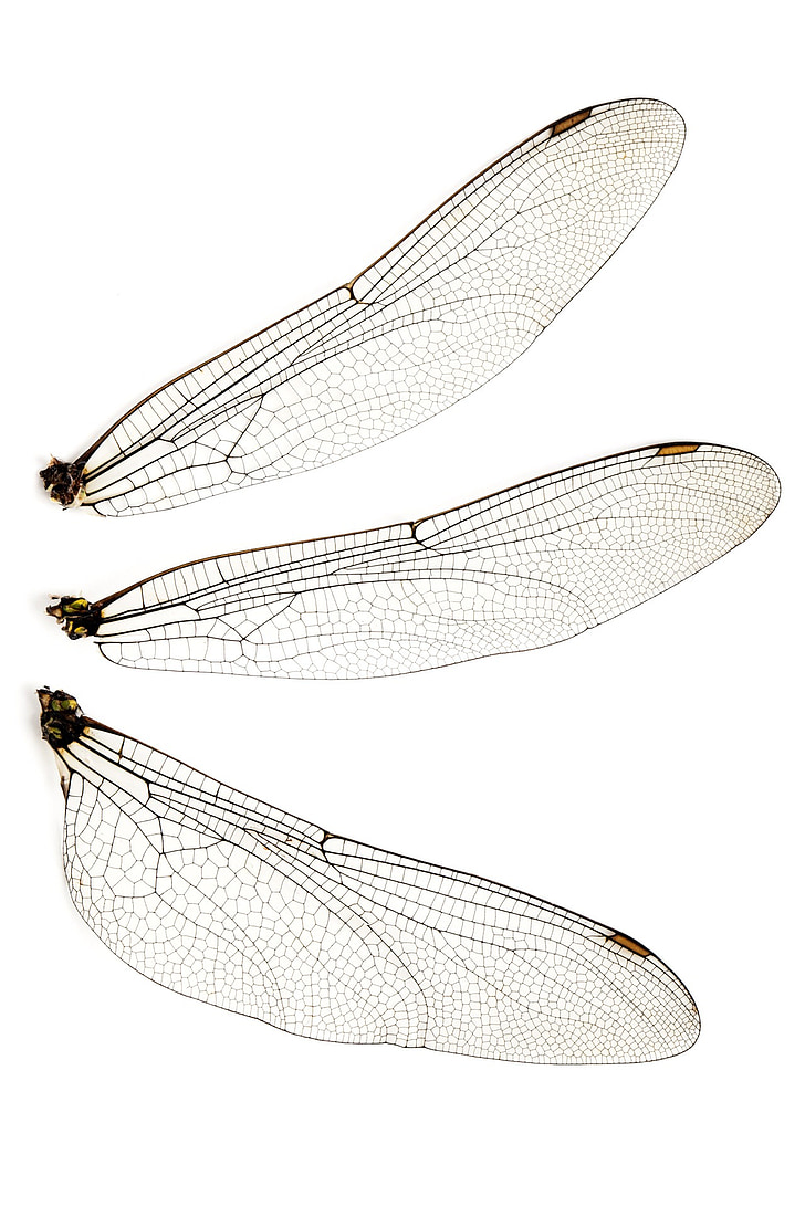 three insect wings
