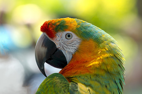 orange and green parrot