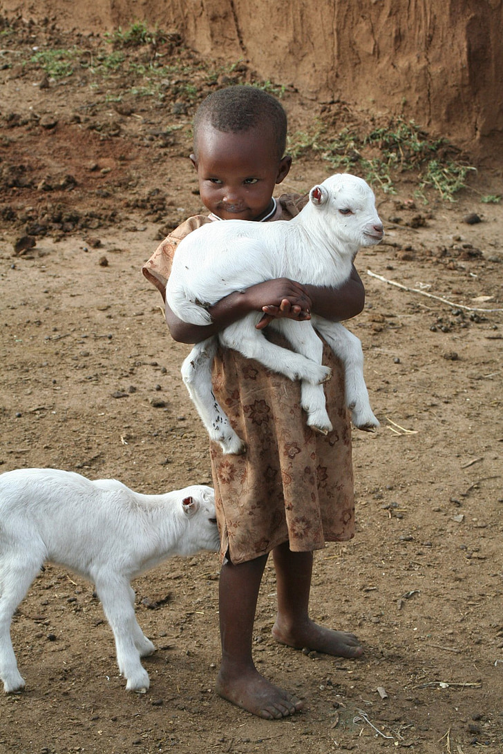 toddler carrying white goat kid