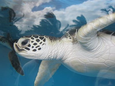 closeup photo of black and white turtle