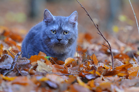 grey cat on withered leaves