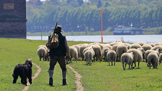 man beside black dog on sheep farm
