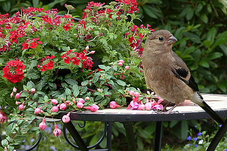 brown bird on the table near red flowers