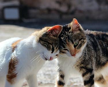 orange and brown tabby kittens