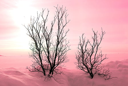 photo of two black trees