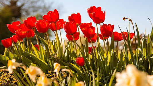 red flowers during daytime