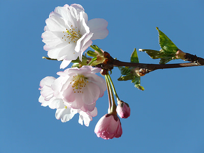 low angle of white flowering tree