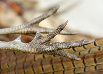 photo of bird feet