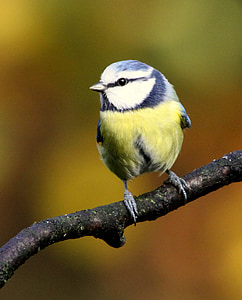 green, blue and white bird