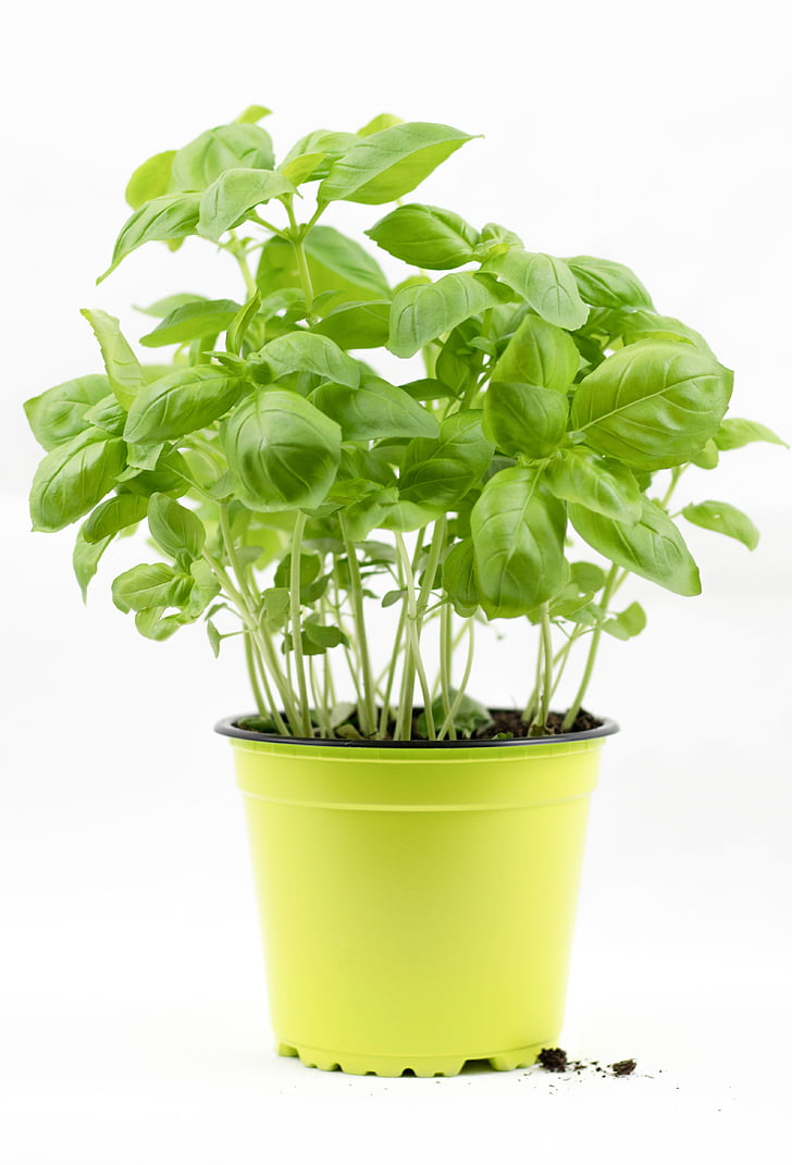 green leafed plant in yellow pot