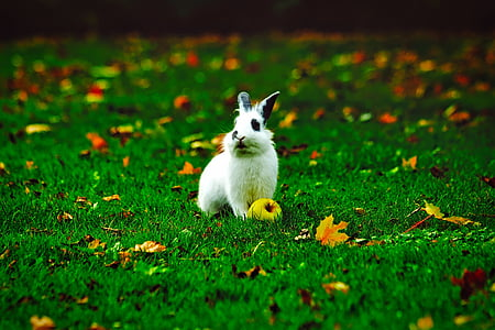 shallow focus photography of white and black rabbit on green grass