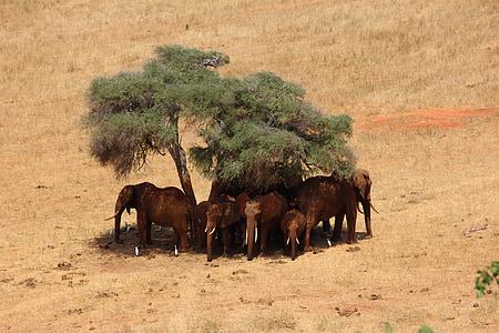 gray elephants under green tree