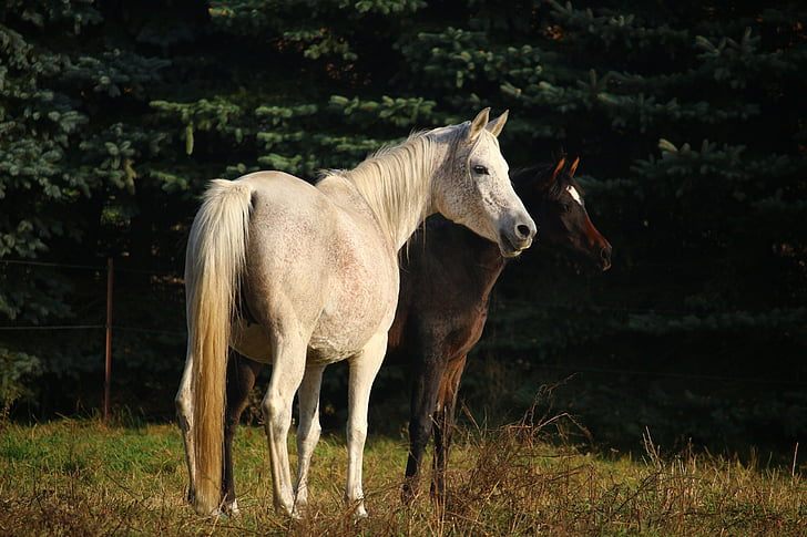 two brown and white horses standing on ground