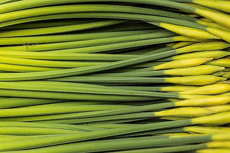 green flower stem lot