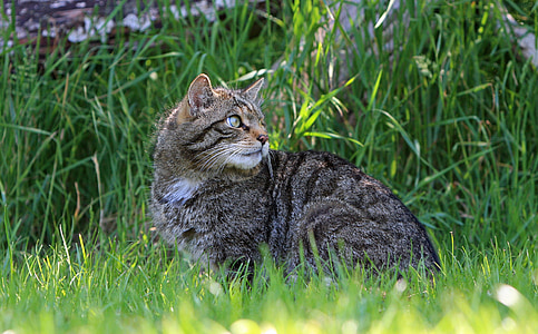 tabby cat sitting near bush