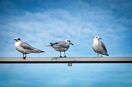 three gulls perched on metal bar under blue sky