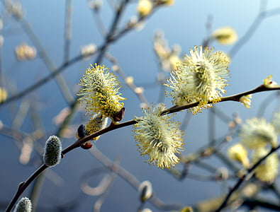 selective focus photography of green willow tree flowers