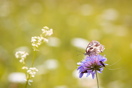 close-up photo of white and brown butterfly perched on purple flower