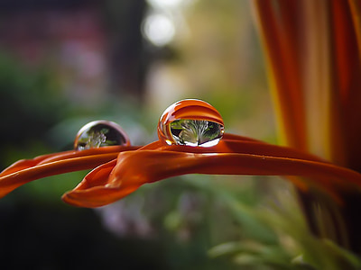 orange petal flower with water droplet in shallow focus photography