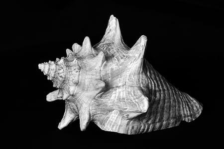 gray shell photography