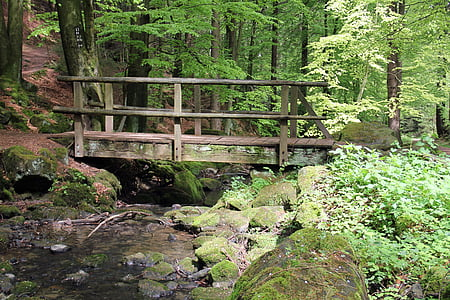 wooden bridge surrounded with trees at daytime