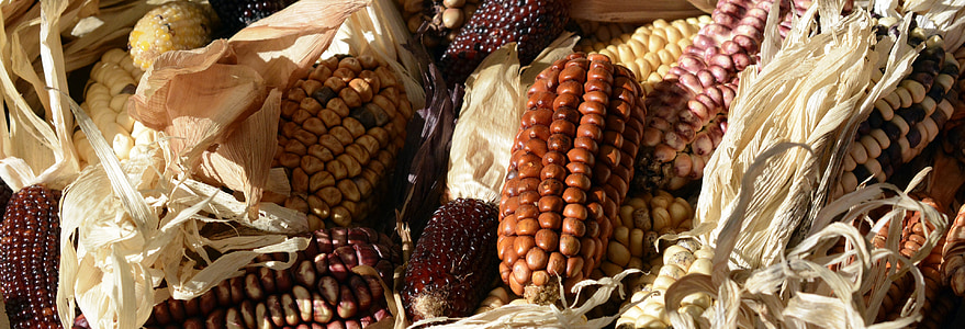 assorted corn
