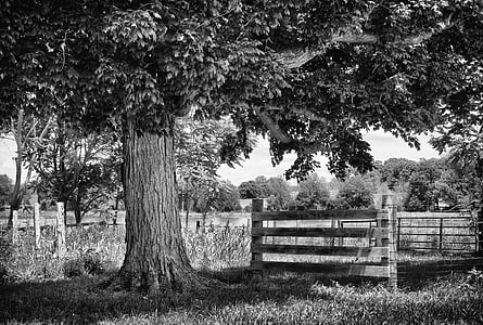 grayscale photo of tree beside fence