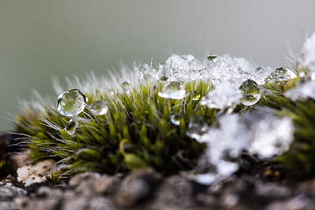 closeup photo of dew drops on green leaves