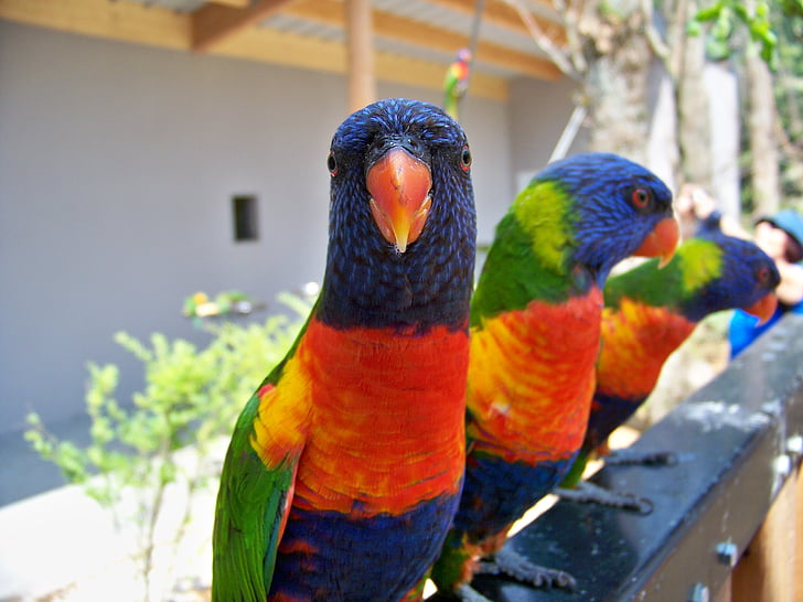 flock of blue-red-and-green parrots