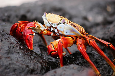 close up photo of orange and yellow crab on rock