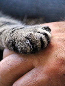 person holding silver tabby cat paw