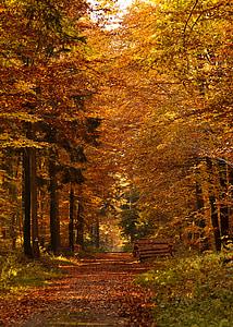 brown forest pathway under sunset