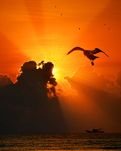 silhouette of bird flying above body of water