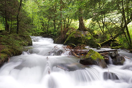 waterfalls surrounded by trees on forest