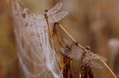 selective focus photography of brown dragonflies