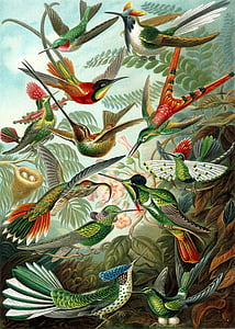 assorted-color bird painting