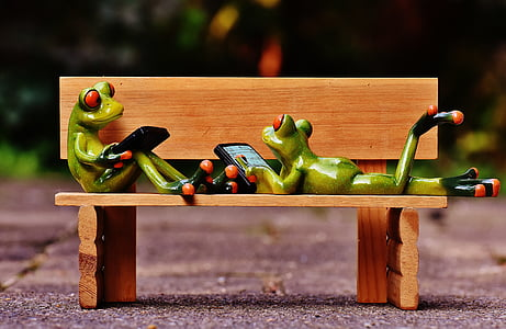 two green frog holding smartphone on brown wooden bench figure taken at daytime
