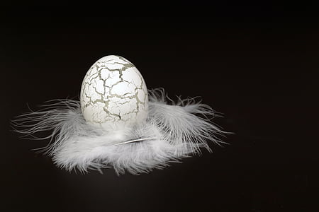 gray and black egg decor with white feather