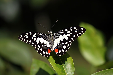 selective focus photography of black and white butterfly